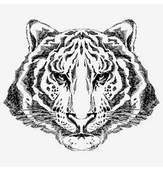 tiger drawn vector image