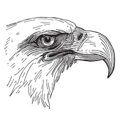 Bald eagle head vintage vector