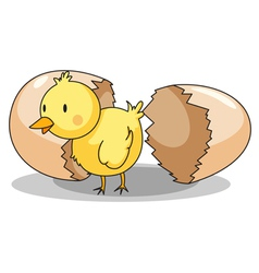 Chick hatching vector