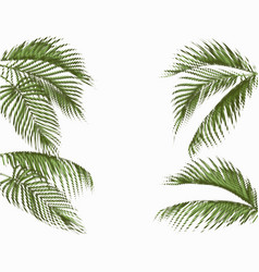Different in shape tropical dark green palm leaves vector