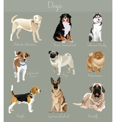different type dogs set isolated big and small vector image