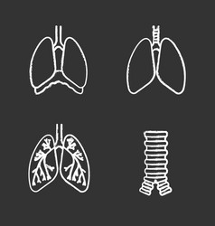 Internal organs chalk icons set vector