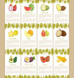 Pitaya and watermelon marang citron posters vector