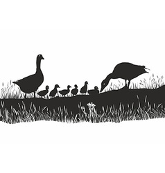 Geese family on spring meadow vector image vector image