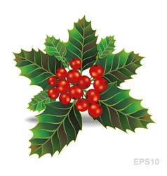 Beautiful holly christmas branch vector image vector image