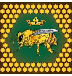 bee color honey vector image vector image