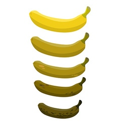 Banana Stage of rotting banana Beautiful yellow vector