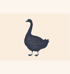goose bird concept design of farm animals vector image