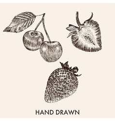 Sketch strawberry and cherry Hand drawn Fruit vector image