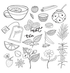 tea hand drawn isolated collection herbal vector image