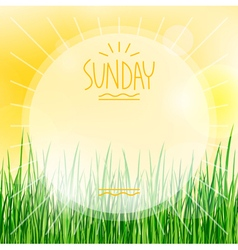 sunny background with green grass vector image vector image