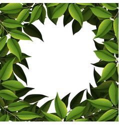 a nature leaf border vector image