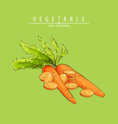 fresh carrots vector image