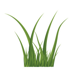 green grass isolated symbol icon design vector image