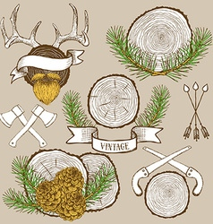 Pine branches and cones with tree rings vector image