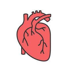 Human heart anatomy color icon vector