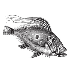 John Dory vintage engraving vector image