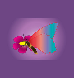 Beautiful butterfly with large wings sits on the vector