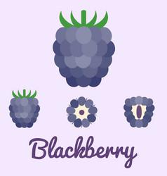 blackberry flat design vector image vector image