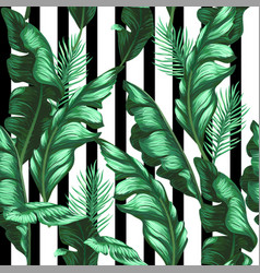 banana leaves pattern tropical background vector image