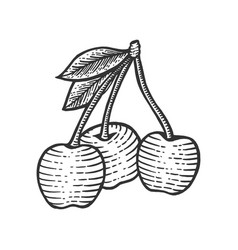 cherry berry cketch engraving vector image