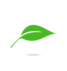 flat leave icon vector image