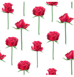 red roses bud vector image