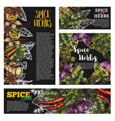 Spice and herb food seasoning blackboard banner vector