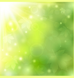 spring or summer sunny natural green background vector image