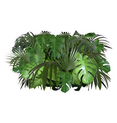 Tropical leaves foliage arrangement vector