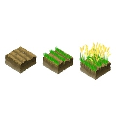 gold grains to grow grain vector image vector image
