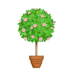 flowering tree in a pot vector image