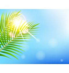 beauty Sunny blue sky and palm tree vector image