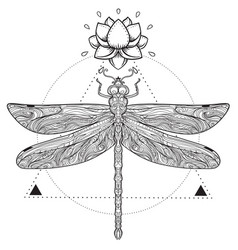 Dragonfly over sacred geometry sign isolated vector