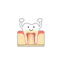 healthy tooth anatomy is fun isolated on white vector image