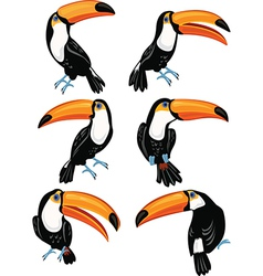 set toucans vector image