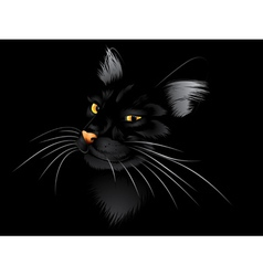 Black cat in the dark2 vector