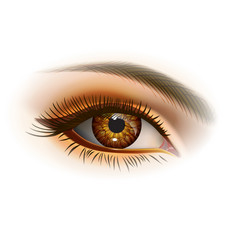 Female brown eye vector