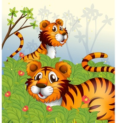 Tigers in the woods vector image