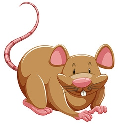 Brown rat vector
