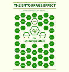 entourage effect overview vertical infographic vector image