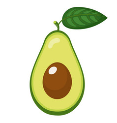 fresh half avocado with leaf isolated on white vector image