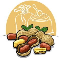 peanuts vector image