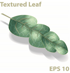 beautiful green leaf with textured surface vector image