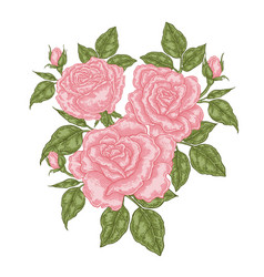 bouquet pink roses floral composition spring vector image