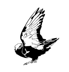 pigeon graphic silhouette vector image