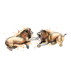 Two fighting lions from a splash watercolor vector