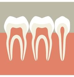 Teeth vector image vector image