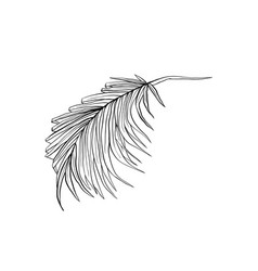 coconut frond sketched vector image