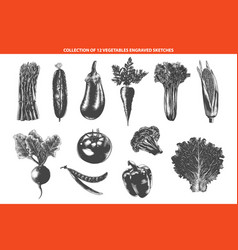 Engraved style organic vegetables collection vector